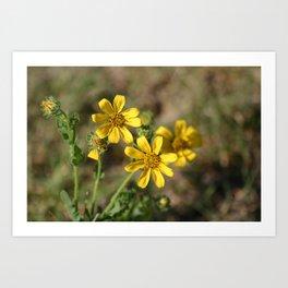 Virginia Wildflowers Art Print