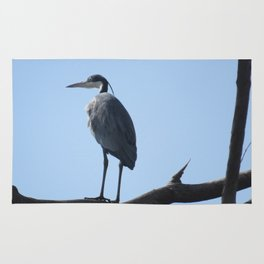 Great Blue Heron with a bird's eye view Rug