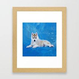 Siberian Husky Puppy Framed Art Print