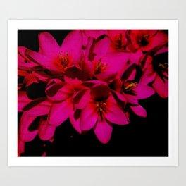 pink flowes Art Print