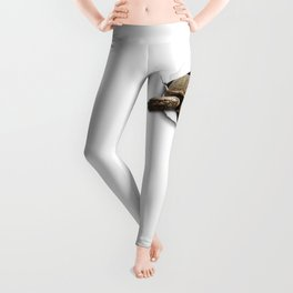 Sulcata Burst Leggings