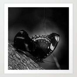 Black Butterfly Art Print