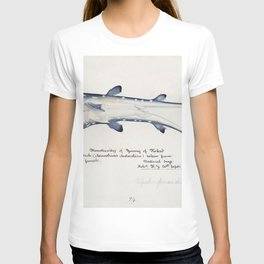 Antique fish Spotted spiny Dogfish drawn by Fe Clarke (1849-1899) T-shirt