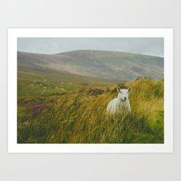 I see ewe on the Sally Gap Art Print