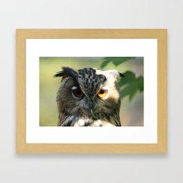 Owl in the light Framed Art Print