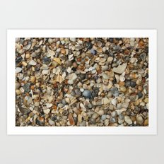 seashell spread Art Print