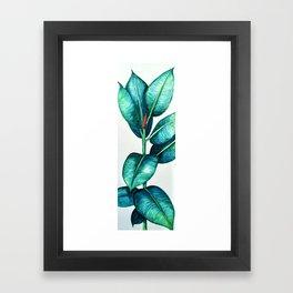 Rubber Tree Framed Art Print