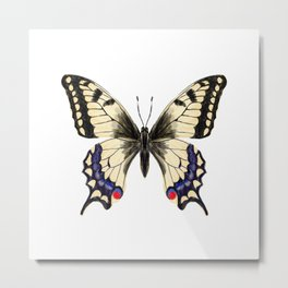 Swallowtail Butterfly - butterfly art, painted butterfly, butterfly design, sweet butterflies Metal Print