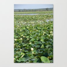 Amana Lilly Pond Canvas Print