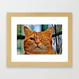 Winking Orange Cat Framed Art Print
