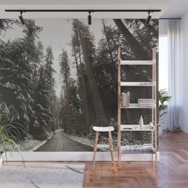 Redwood Forest Adventure II - Nature Photography Wall Mural