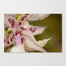 Cambria 5-8022 Canvas Print
