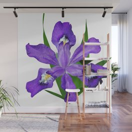 Dwarf crested Iris, Iris cristata on white Wall Mural