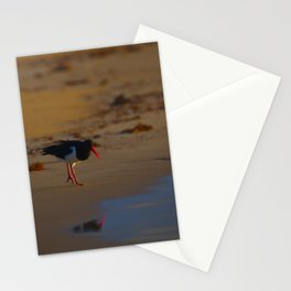 A Pied Oyster Catcher At Sunrise Stationery Cards