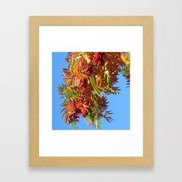Fallbeauty/Rowan berries Framed Art Print