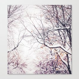 snowy trees in Montreal Canvas Print