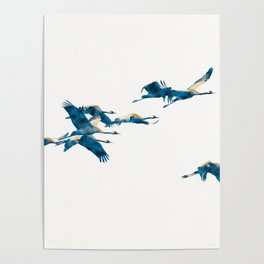 Beautiful Cranes in white background Poster