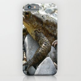 Bufo Bufo Toad Lounging On Stones iPhone Case