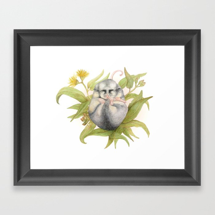 Mountain Pygmy Possum  Framed Art Print