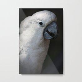 Photograph of a cockatoo Metal Print