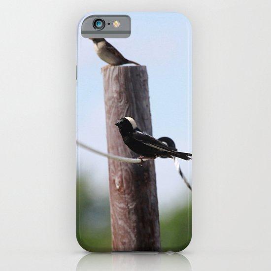 Bobolinks iPhone & iPod Case