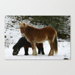 Horses in Winter Canvas Print