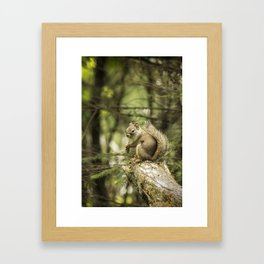 Who You Calling Squirrelly? Framed Art Print