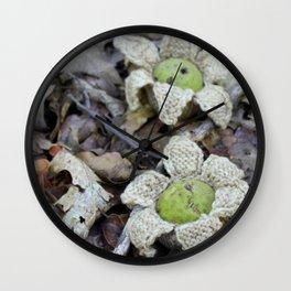 Juglans Nigra - Black Walnut Wall Clock