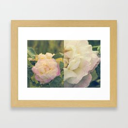 Summer's Rose Framed Art Print