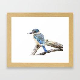 Sacred Kingfisher - Todiramphus sanctus Framed Art Print