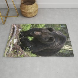 King of forest, male brown bear approaching Rug