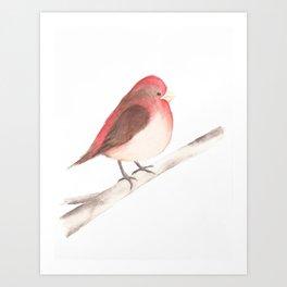 Chubby Finch Art Print