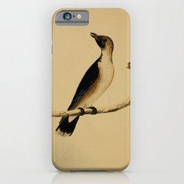 Vintage Print - The Austral Avian Record (1912) - Dusky Babbler iPhone Case