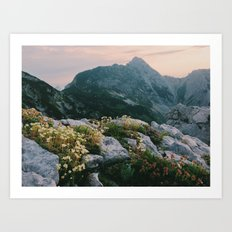 Mountain flowers at sunrise Art Print