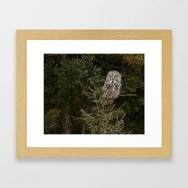 Pine Prince Framed Art Print