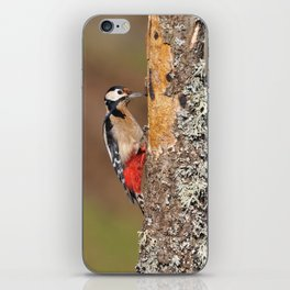 Great spotted woodpecker. iPhone Skin