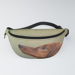 Dog breed long haired dachshund portrait oil painting Fanny Pack