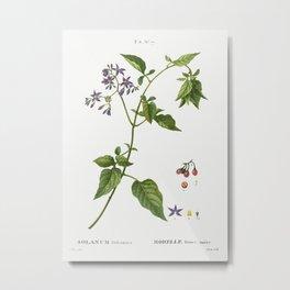 Bittersweet, Solanum dulcamara from Traité des Arbres et Arbustes que l'on cultive en France en plei Metal Print