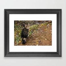 Lake Kitty Framed Art Print