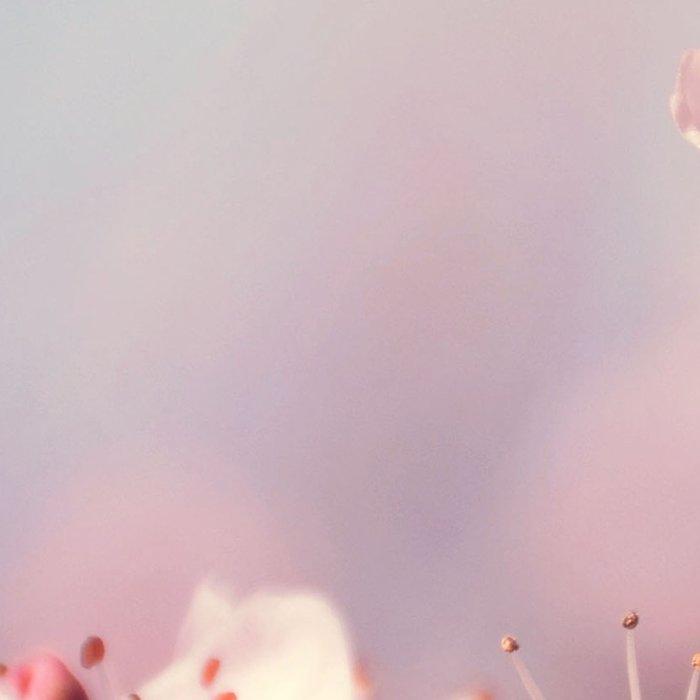 Joyful Pixie Cherry Blossom Leggings