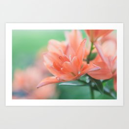 Lilies - Flower Photography Art Print