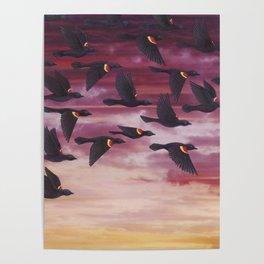 red-winged blackbird flock in flight Poster