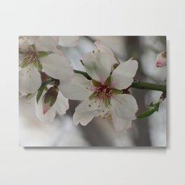 Almond Blossom Series 4 Metal Print