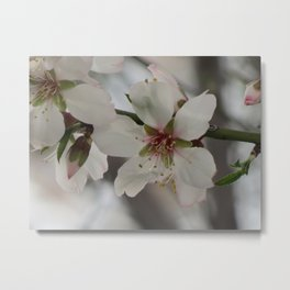 Almond Blossom Series 4 Metal Print