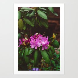 Brooklyn Heights Blooms II Art Print