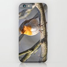Robin Redbreast Slim Case iPhone 6