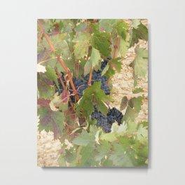 Rioja Grapes 2 Metal Print