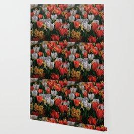 Colorful White and Orange Tulip Carpet Wallpaper
