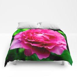 Queen Elizabeth Rose Comforters