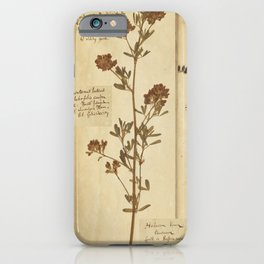 Dried plants - Vintage Herbarium iPhone Case